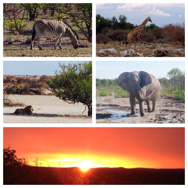 tierwelt-namibia