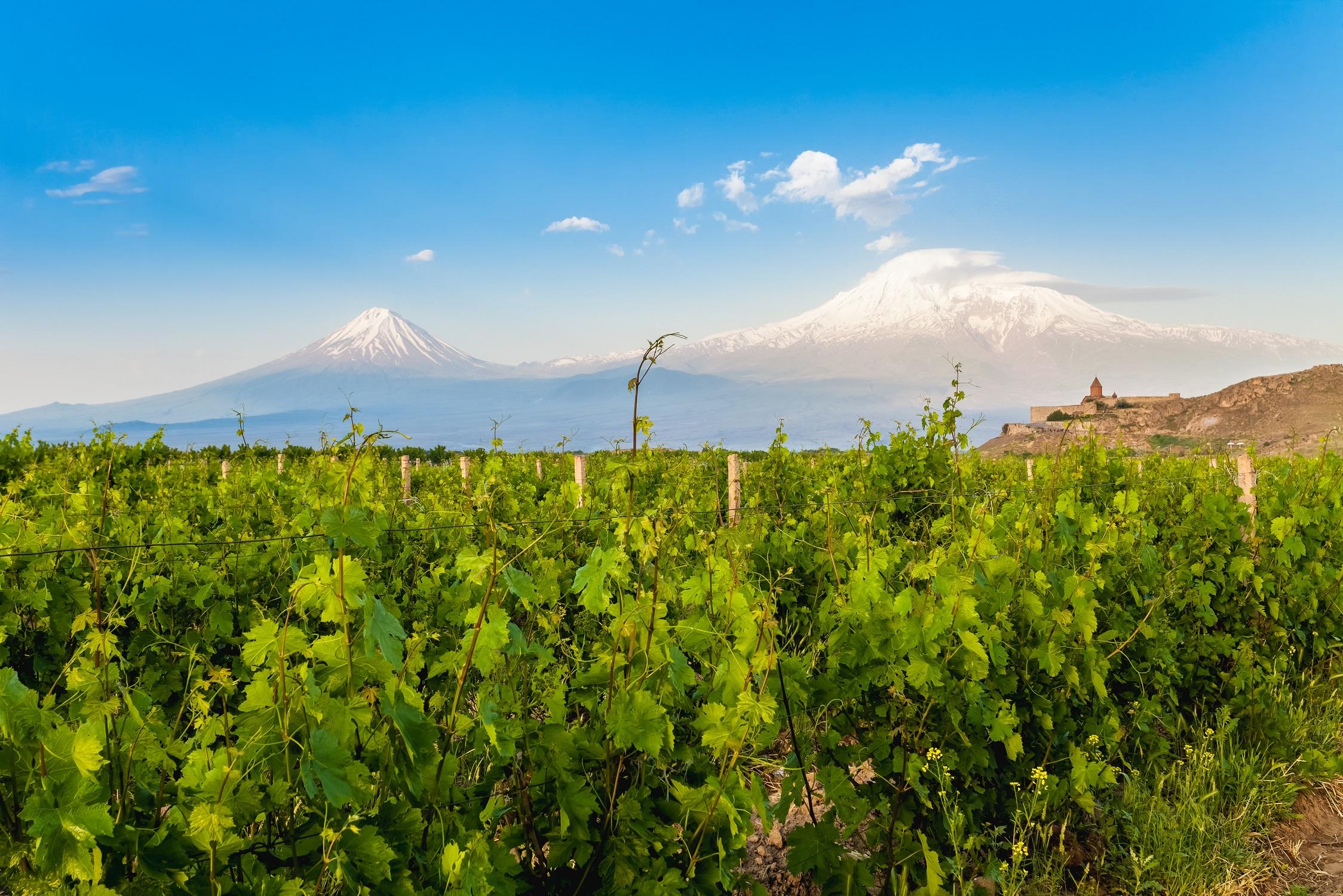 Weinanbau im Ararat Dort mit Blick auf Khor Virao und den Ararat, Armenien
